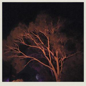 tree_botanicgardens