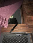 Lafayette doorway tail