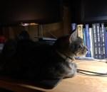 Zortea on my laptop
