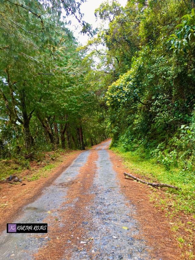 Parque Podocarpus