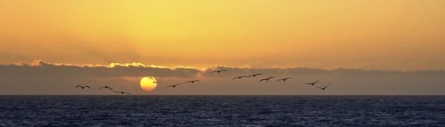 Image décorative : soleil se couchant sur la mer avec un vol d'oiseau au premier plan