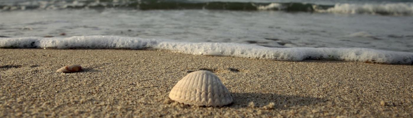 Image décorative : coquillage sur une plage de sable, avec les vaguelettes qui viennent se casser juste derrière lui.