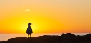 Coucher de soleil- Californie