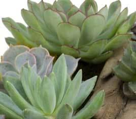 Succulent blog
