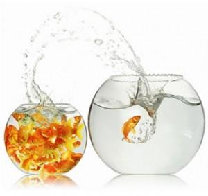 Wachstum - Fisch im Wasserglas