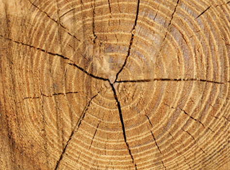 https://i1.wp.com/www.karis.biz/images/tree-rings.jpg