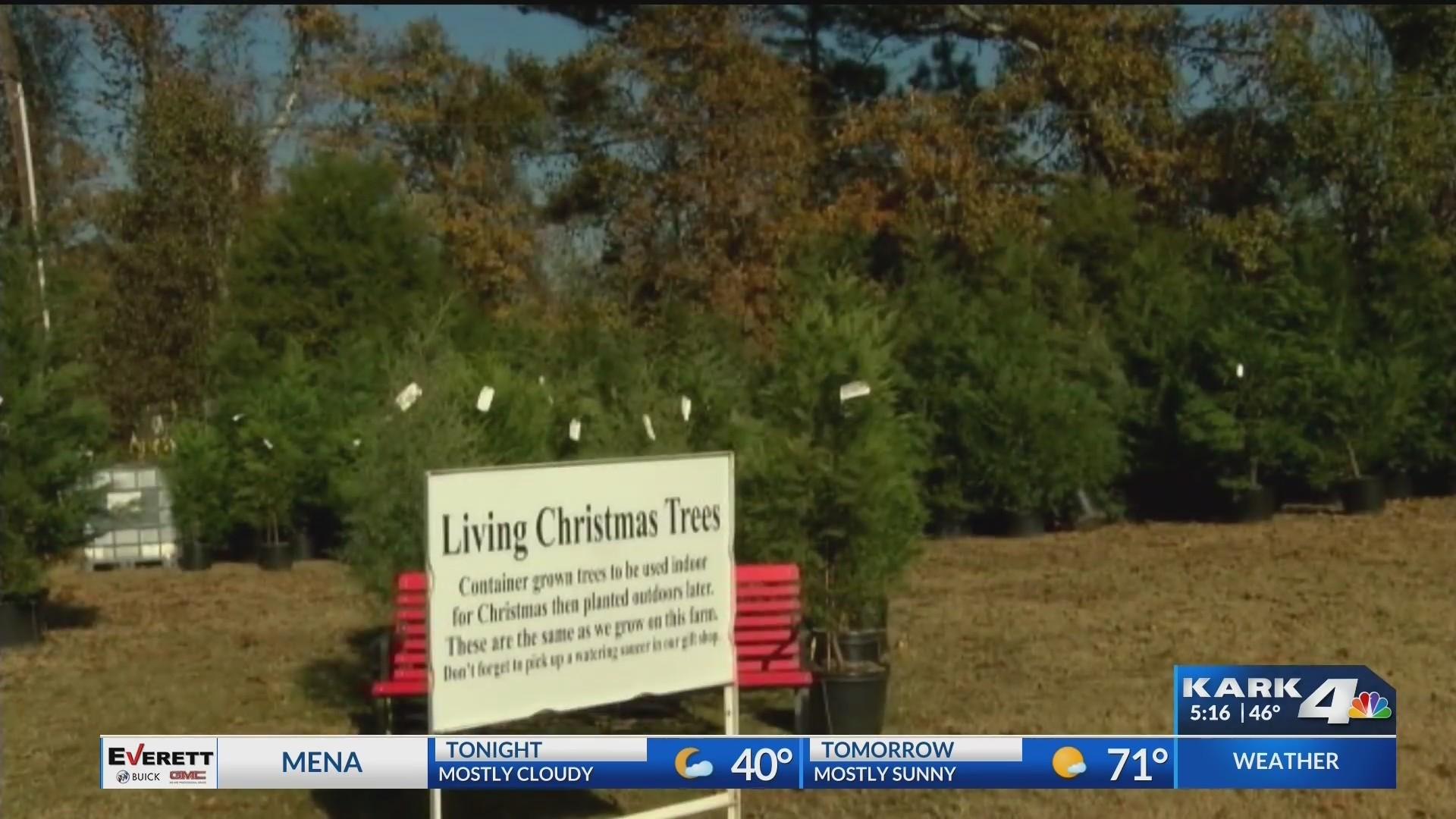 Christmas_Tree_Farm_0_20181123232938