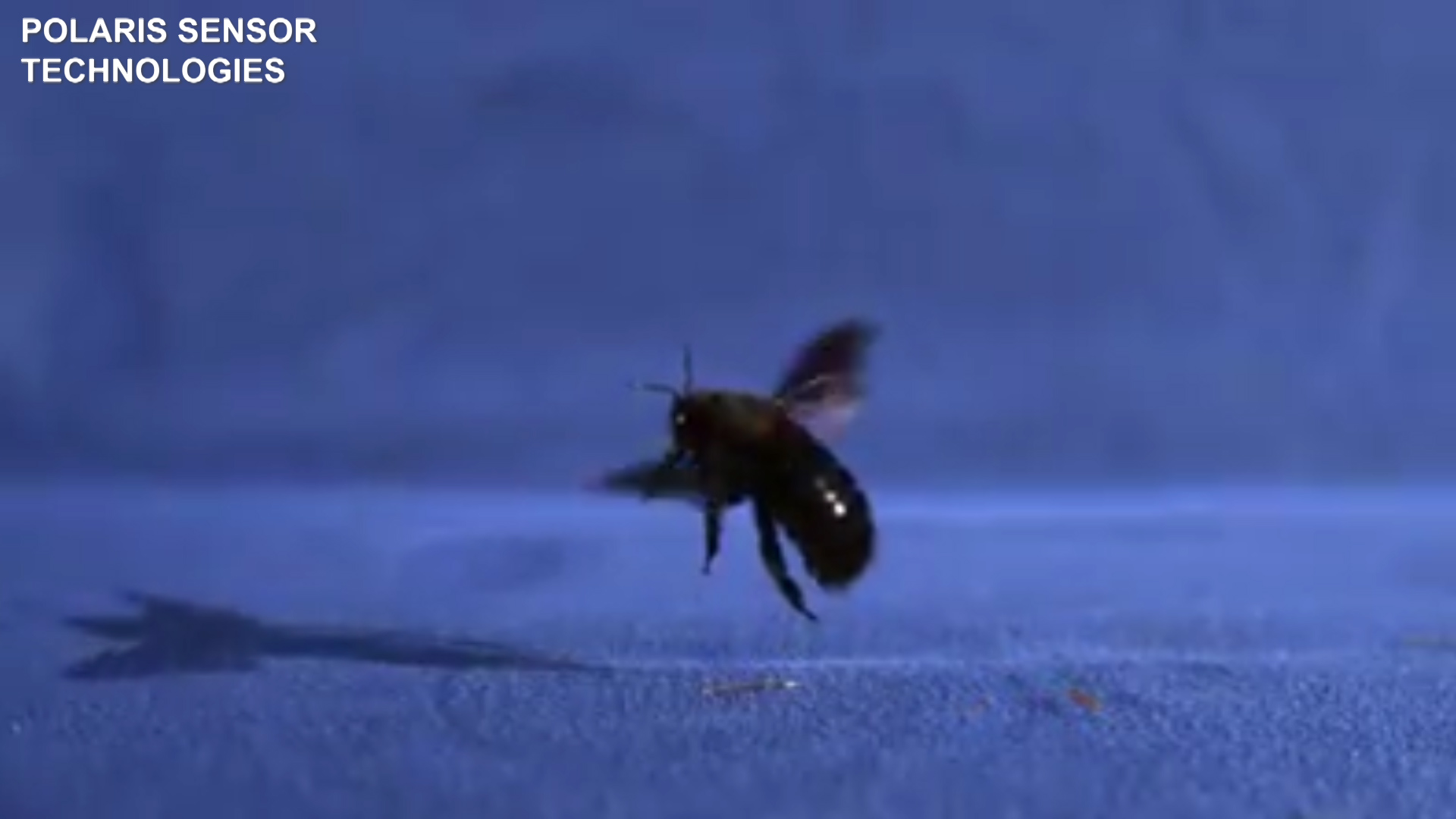 0408 bug rd_1554766113303.jpg-159665.jpg