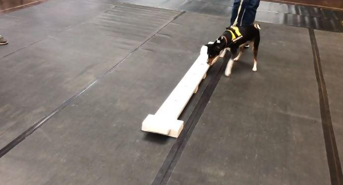 dog training_1560181056374.JPG.jpg