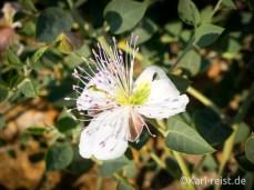 Tal der Tempel Agrigento Blumen