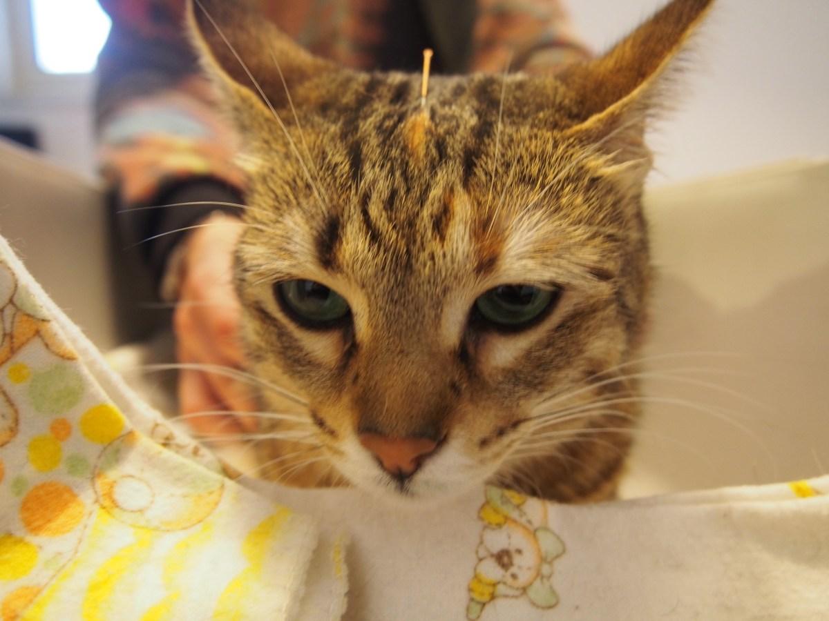 Alteração Comportamental no gato e a MTC (Parte I)