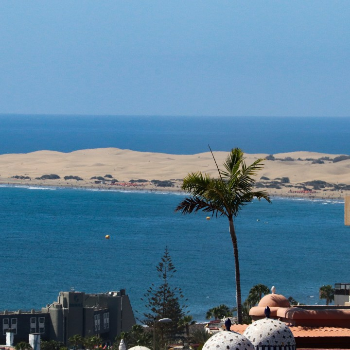 A view of the Maspalomas sand dunes from San Augustin. There is a palm tree in the foreground.
