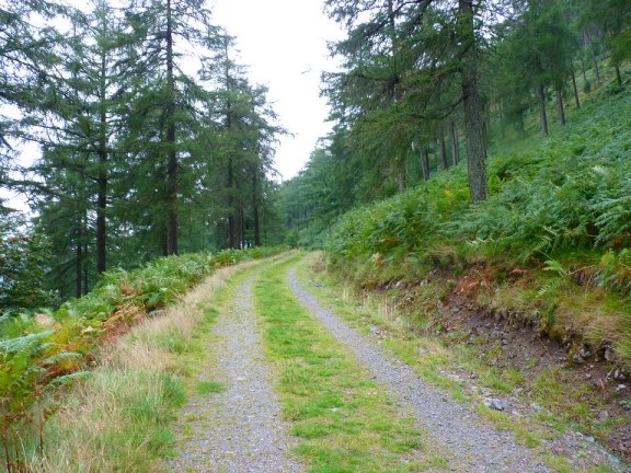 Picture courtesy of Mr K. Holden: The lovely path through the woods to the start of the climb.