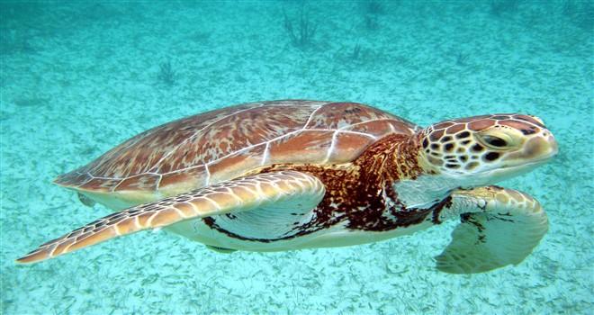 Escursione di Snorkeling Akumal e Cenotes