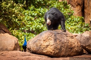 Daroji Sloth Bear Sanctuary, Near Hampi – Home to Sloth Bears