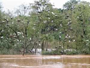 Mandagadde Bird Sanctuary – The little island of Mandagadde