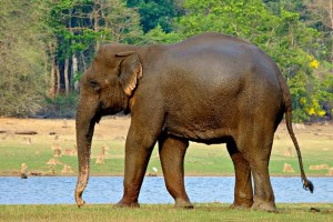 Nagarahole National Park – Where the Wild Reside