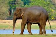 Fauna of Karnataka