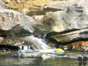 Achakanya Falls, Shimoga – A Hidden Beauty