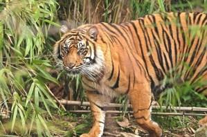Someshwara Wildlife Sanctuary, Udupi: Haven to the Truly Wild
