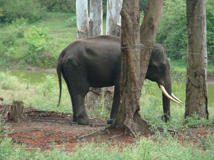 near Virajpet, Dubare, Dubare elephant camp