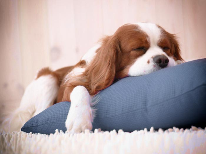 The Benefits of Reliable Pet Boarding