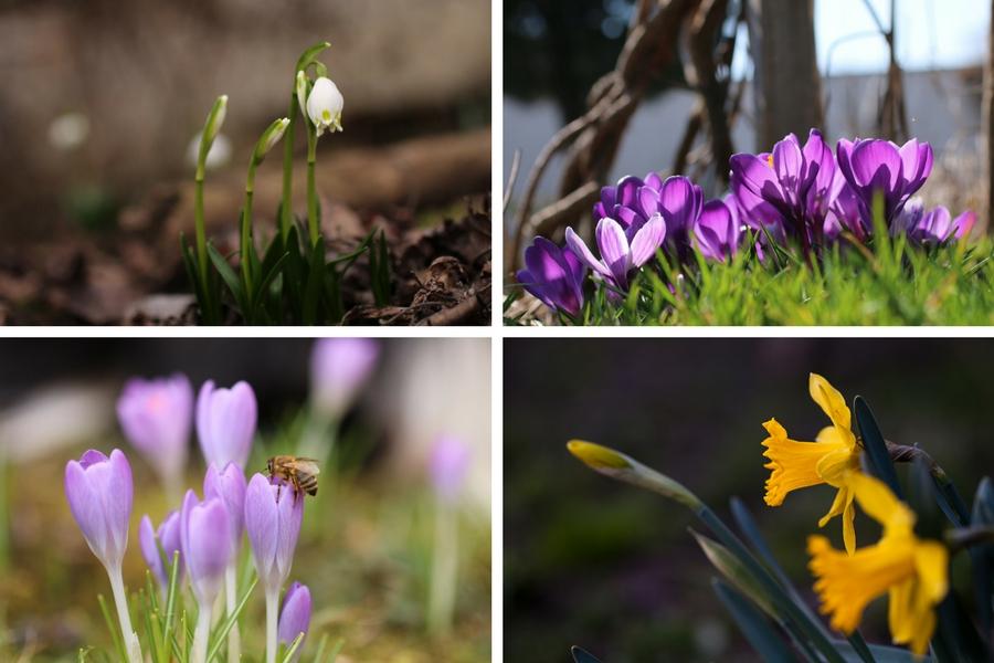Frühling im Garten - Fotos: Thomas Burchhart, Annika Wascher