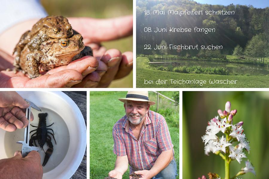 Terminübersicht Mai / Juni 2019 an der Teichanlage Alois Wascher - Karpfenking