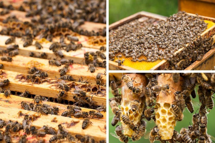 Die Welt im Bienenstock