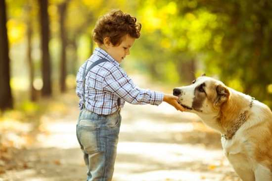 little boy plays with dog in autumn park