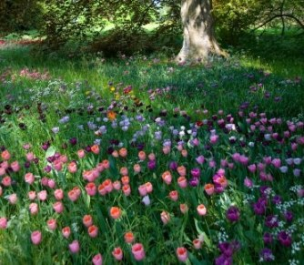zahrada-snu