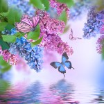Branch of lilac blue and pink butterfly and water