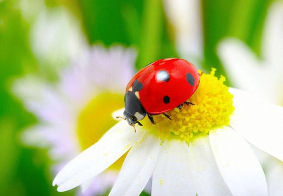 Красивые картинки с насекомыми и цветами