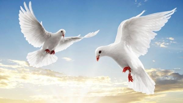 Картинка Летите голуби летите » Голуби » Птицы » Животные ...