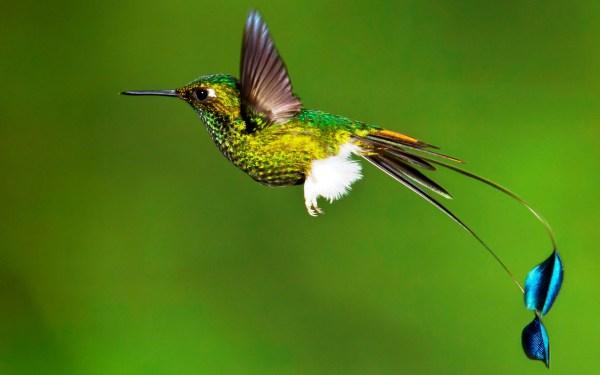 Картинка Красивая птичка колибри » Колибри » Птицы ...