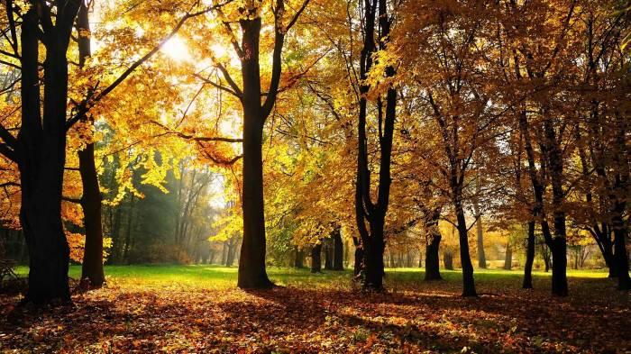 Обои Осенний парк, картинки - Обои на рабочий стол Осенний ...