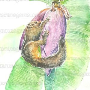 Remove term: Animals AnimalsRemove term: Art ArtRemove term: Art Gallery Art GalleryRemove term: Karunagama KarunagamaRemove term: Online OnlineRemove term: Online Art Galley Online Art GalleyRemove term: Rodents RodentsRemove term: Squirrels SquirrelsRemove term: Sri Lanka Sri LankaRemove term: Sri lanka squirrels Sri lanka squirrelsRemove term: Water Colour Water ColourRemove term: Watercolor Watercolor