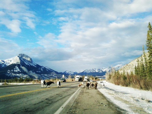 Photo title: Goats on the Road