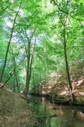 (c) kaschpar, Hellmühler Fließ