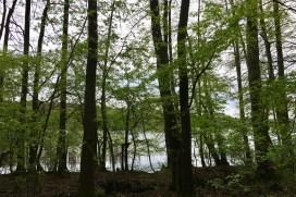 (c) kaschpar, Fängersee