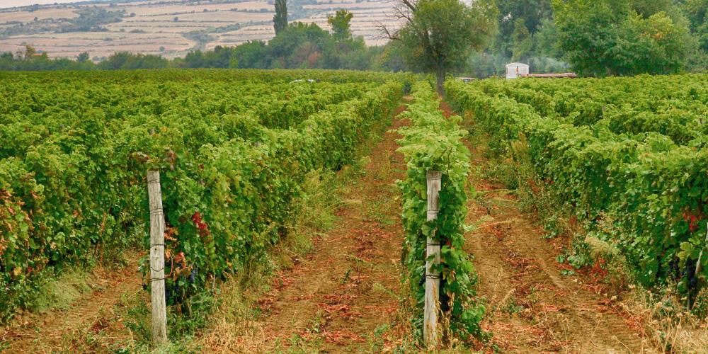 7 unique Bulgarian wine varieties you must taste
