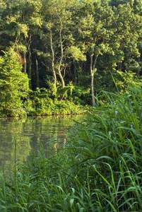 Alluvial floodplain jungles: Kamchia and Ropotamo