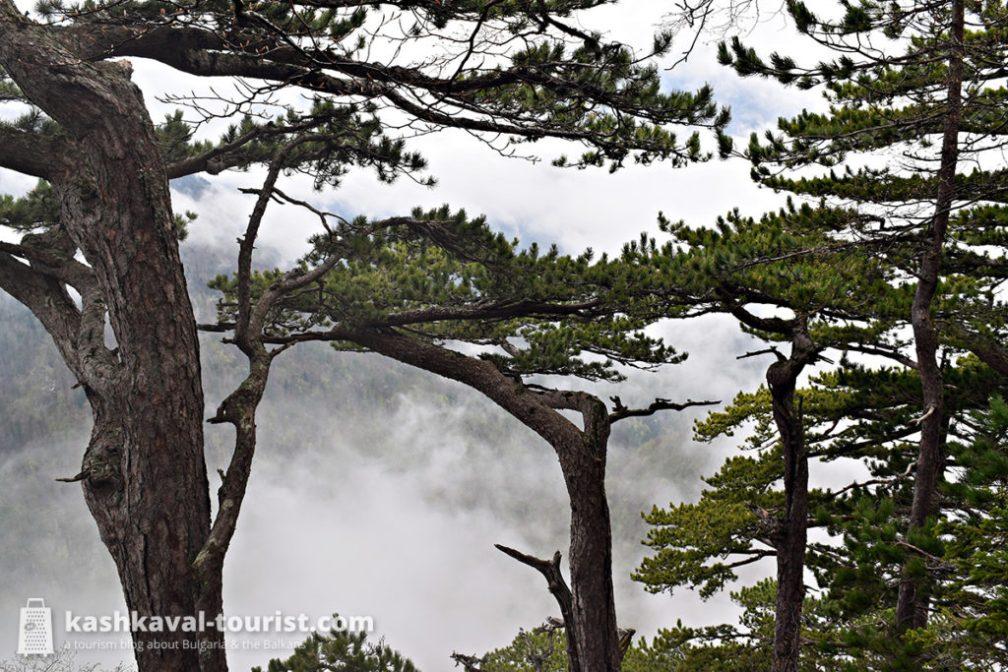 Step into the Balkans' last primeval temperate rainforests: Sutjeska National Park