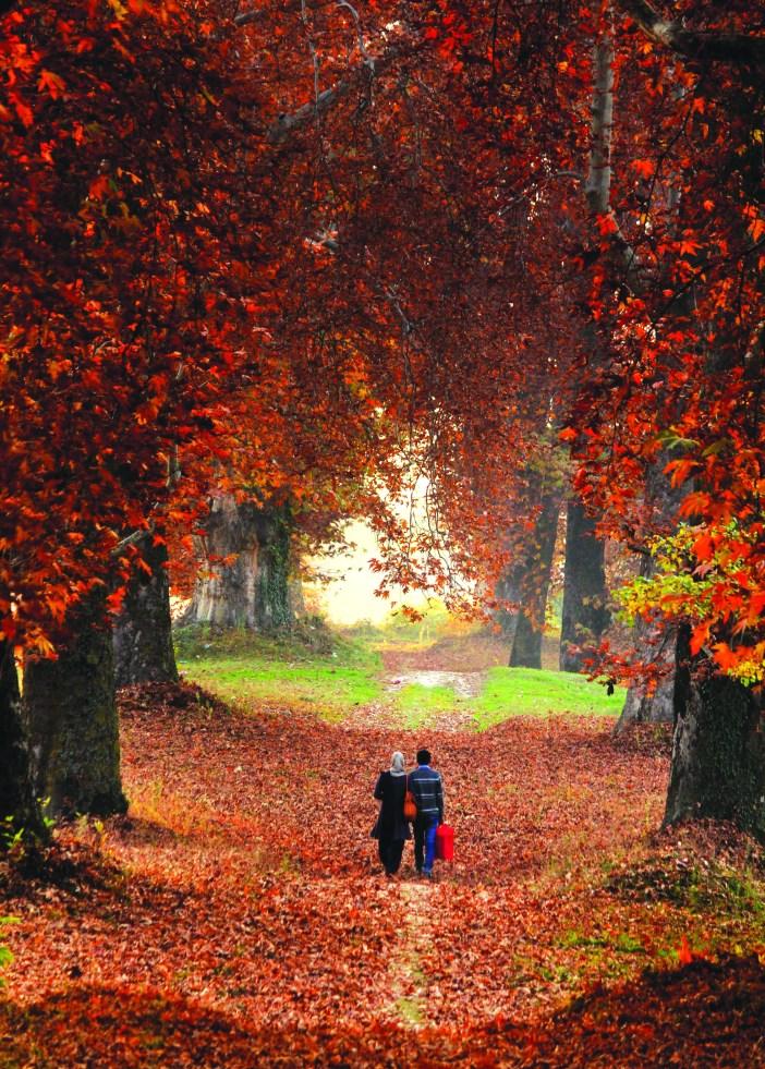 A couple walks in Kashmir University's Naseem Bagh in autumn (KL Image: Bilal Bahadur)