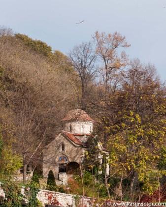 Ogród botaniczny w listopadzie / Jardin botanico en noviembre