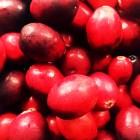 cranberry walnut squares recipe
