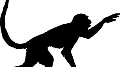 Photo of برج القرد الصيني 2021