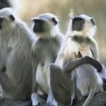 Animals in Kasol