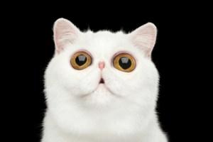 Erstaunte Katze