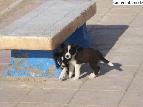 Auch Marokkaner haben süße Hunde